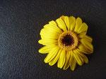 Der Weg der Blüte, Foto