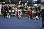 Rüde - Championklasse: 11669 Laristra Haus Vasilek – V4, 11670 Stail Aikeno Maru Asikabi Sikodzi – V2, res.CACA, 11671 Fuinrando Abbott Ramaria - V, 11672 Cinderlace Sachio at Dekobras - V