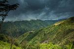 Diese enge, steile und unglaublich grüne Tal.....