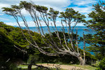...den meisten Bäumen sieht man die Windrichtung an...