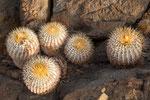...ansonsten hauptsächlich Kaktusse oder nichts...