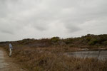Es gibt keinen Zaun zwischen den riesigen Alligatoren und den Besuchern