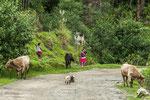 ....Haustiere haben in Südamerika absolute Vorfahrt....