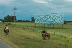In Uruguay ist das Pferd noch überall zu sehen - auch am Strassenrand...