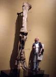 Hinterfuss des Albertosaurus - Rita reicht bis zum Knie