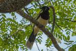 ...die meisten Vögel sind laut und relativ zutraulich