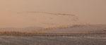 ....und an der Laguna Paraiso sind zigtausend Möwen und Zugvögel....