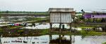 ....zum Säen des Reis werden die Felder geflutet....