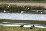 ....die Laguna ist bevölkert von Vögeln.....
