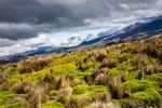 Die Vegetation um den Chimborazo ist einmalig in Ecuador.....