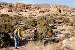 Wanderung in der Mojave Wüste