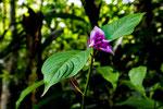 Entlang des Rio Claro ist tropischer Urwald.....