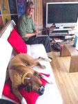 Internetcafe: Hund und Sofa war im Preis mit dabei