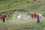 ....Kinder hüten Lamas und Alpacas.....