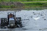 ....ein Traktor fürs Reisfeld....