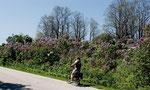 Villen mit blühenden Gärten