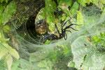 ....und viel zu großen Spinnen.