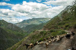 ....oder die Schafe lassen einen nicht vorbei....