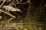 ....a heron....