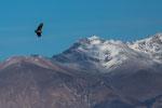 ...toll - wie elegant und ohne Flügelschläge sie an Höhe gewinnen...