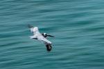 ....wir hatten einen tollen Blick auf Pelikane und Fregattvögel....
