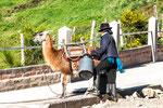 ....Transportmittel Lamas....
