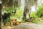 ....vorbei and moosbehangenen Bäumen....