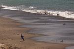 ....gefischt wird altertümlich - aber umweltfreundlich - mit Netz vom Strand aus...