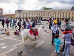 "….Lamas auf dem berühmten ""Plaza del Bolivar""….."