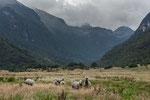 ....und viele Lamas.....