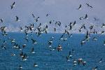 ....aber hauptsächlich fischen die tausende Wasservögel....