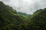 ....Regenwald an den Hängen den Westkordilleren.....