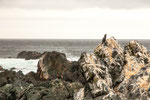 "...die Felsen übersaht mit ""Dünger"" der Seevögel..."