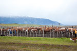 ...eine Rinderfarm.