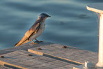 ...viele Wasservögel am Rio Negro...