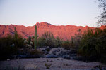 Glühende Saguaro Wüste