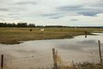 Trotz viel Wasser wächst hier nicht viel...