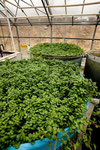 Bakterien und Schwermetalle sowie Stickstoff abbauende Pflanzen
