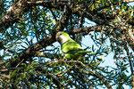 ...einer der ganz frechen - ein Papagei - die schimpfen den ganz Tag...