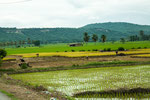 ....der gestaute Fluss liefert viel Wasser für Reisanbau....