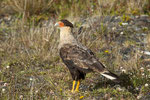 ...dieser Adler war ganz neugierig...