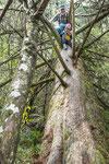 ....oder auf dem Bäume klettern....