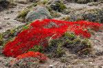 ...Zwischendurch tolle Frühlingsfarben - extrem intensives rot...