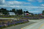 Am meisten haben uns die Blumen entlang der Route begeistert....