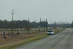 Ein Sheriff (mit Blaulicht) sichert die Strasse wegen entlaufener Kuh....