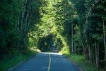 ...am Schluss ging es durch dichten Urwald...