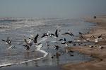 unglaublich viel verschiedene Vögel - die meisten unbekannt