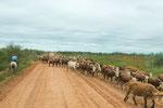 ...Gauchos mit einer Viehherde...