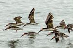 Für diese tollen Wasservögel mit ihrem langen, roten Schnabel...