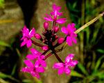 Für diese tollen Wildblumen kennen wir leider die Namen nicht